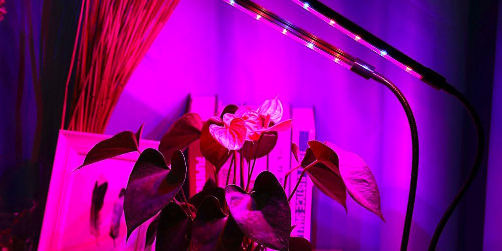 Lampade Per Piante Da Appartamento.Lampade Per Piante Da Interno 5 Modelli Perfetti Per Le Tue Piante